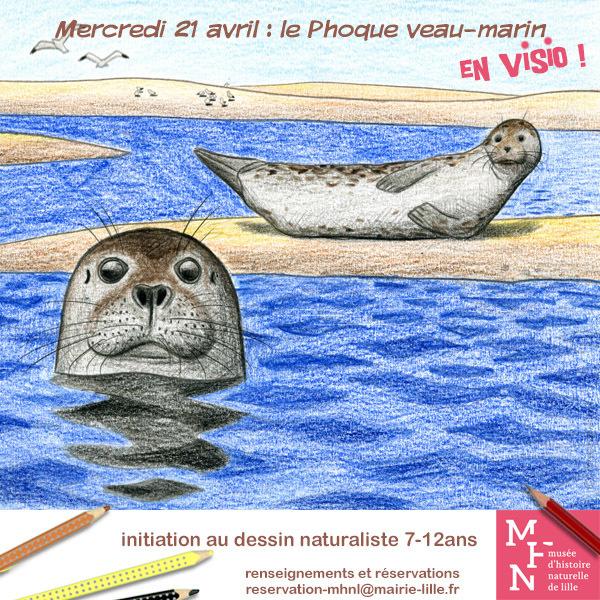 COMPLET / Atelier dessin en visio : Le Phoque Veau-marin !