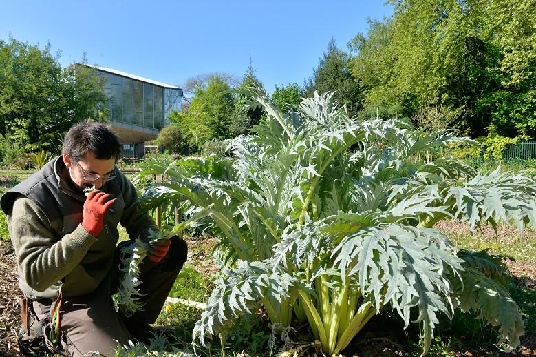 Une journ e au jardin des plantes envie de nature l - Jardin des plantes angers horaires ...