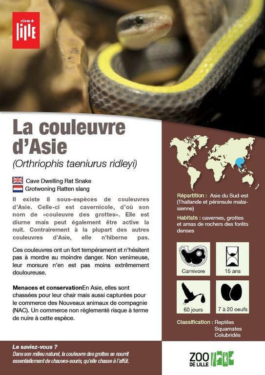 Fiche couleuvre Aasie