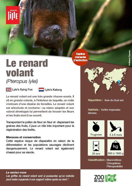 Le Renard Volant    Les Animaux Du Zoo    Zoo De Lille