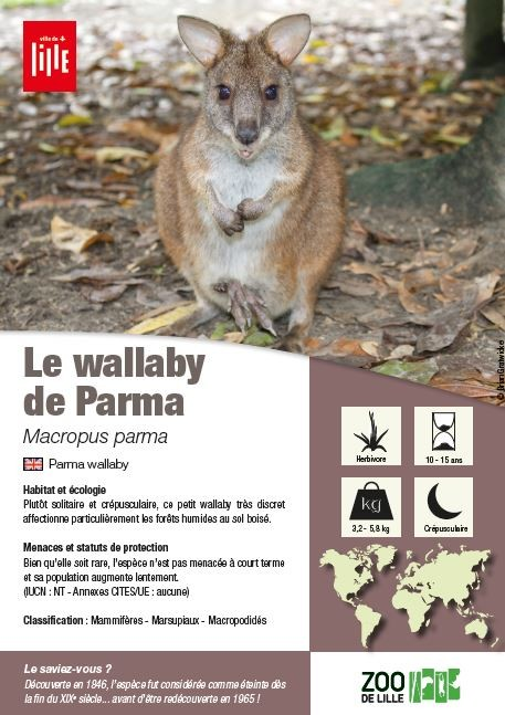 fiche wallaby
